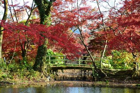 半木神社への誘い