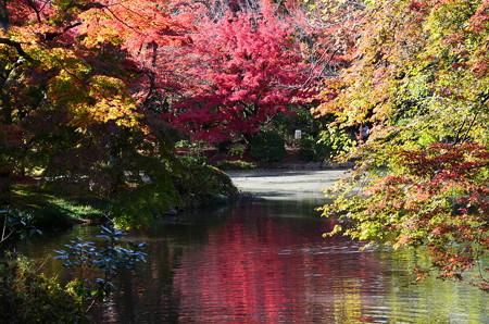 赤く染まる池面