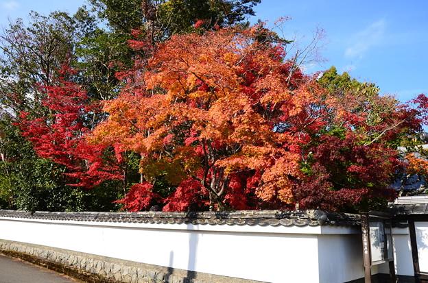 紅葉の西方寺