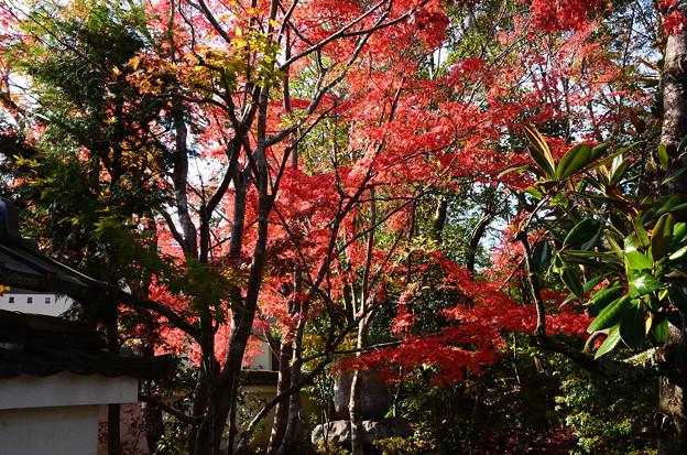 境内から見る紅葉