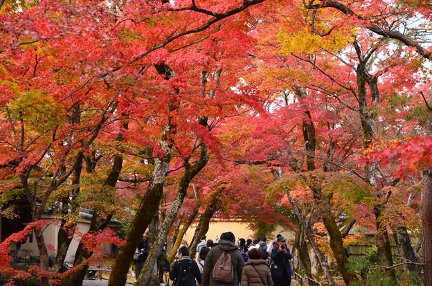 参道を蔽う紅葉