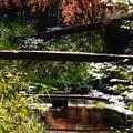 写真: 秋色に染まる泉川
