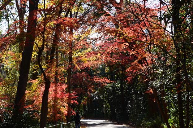 色づく糺の森