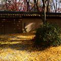 黄色に染まる河合神社