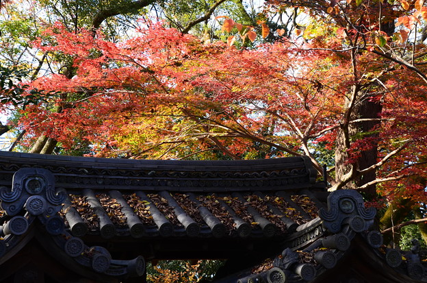 河合神社の色づき