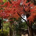 上御霊神社の紅葉