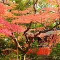 福徳稲荷の紅葉