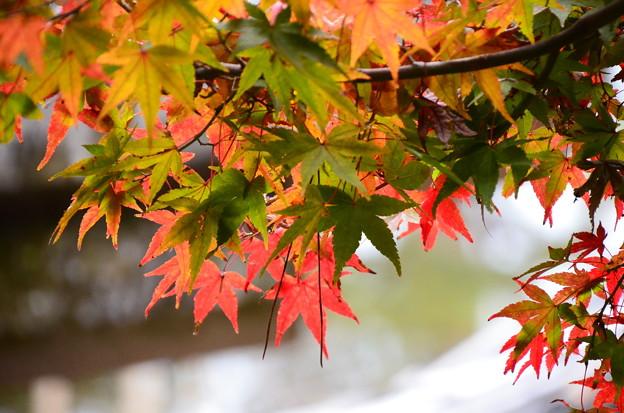 秋はまだこれから~