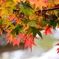 写真: 秋はまだこれから~