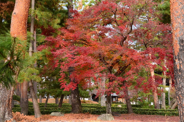 相国寺の紅葉