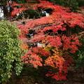 近衛池脇の紅葉