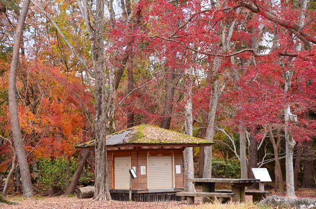 京都御苑の紅葉景色