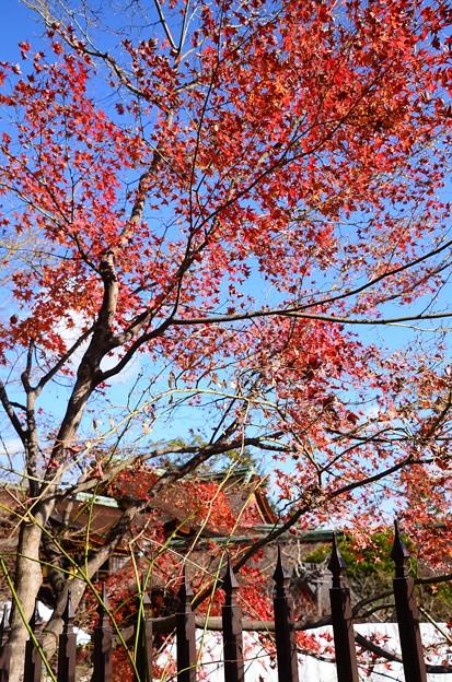 本殿の屋根と紅葉