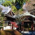 新春の栄摂院