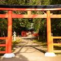 Photos: 半木神社(なからぎじんじゃ)