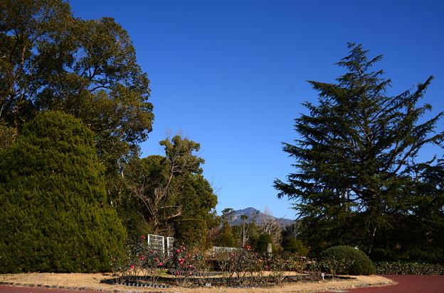 冬空の府立植物園