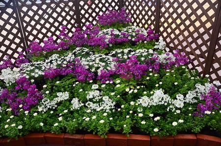 早春の草花展