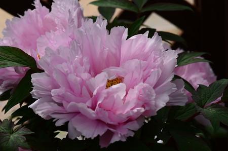 花の里(ハナノサト)