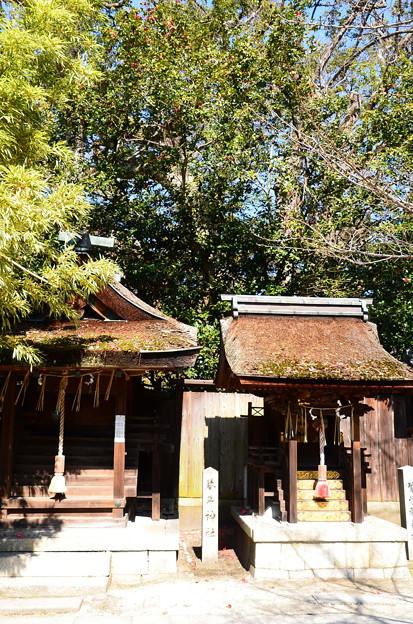 宗像神社の薮椿