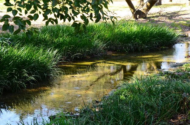 早春の小川