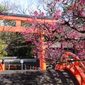 Photos: 曲橋と鳥居と光琳の梅