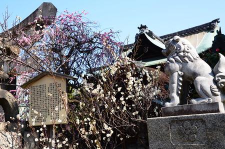 梅咲く菅大臣神社