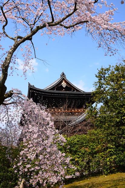 山門と枝垂れ桜
