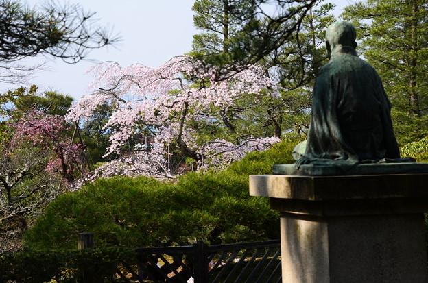 宮崎友禅の碑と枝垂れ桜