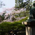 Photos: 宮崎友禅の碑と枝垂れ桜