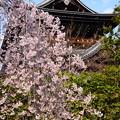 Photos: 山門を背景に~
