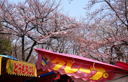 桜の賑わい