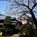 西翁院の桜