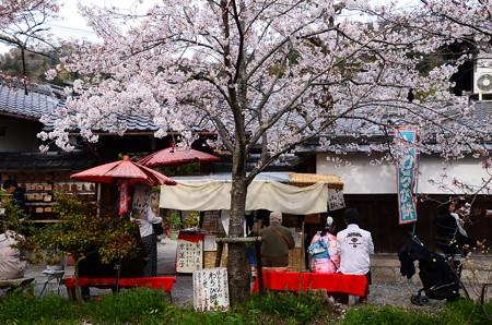 哲学の道の桜風景