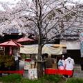 Photos: 哲学の道の桜風景