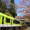 Photos: 桜ときらら