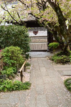 雨宝院の桜風景
