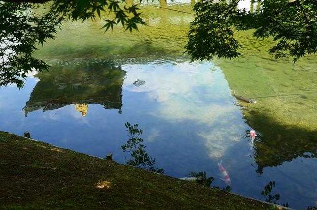 初夏の空を泳ぐ