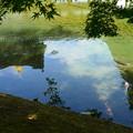Photos: 初夏の空を泳ぐ