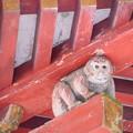 Photos: 屋根を支えるお猿さん