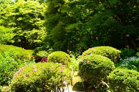 緑の詩仙堂