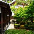 Photos: 緑の十牛の庭
