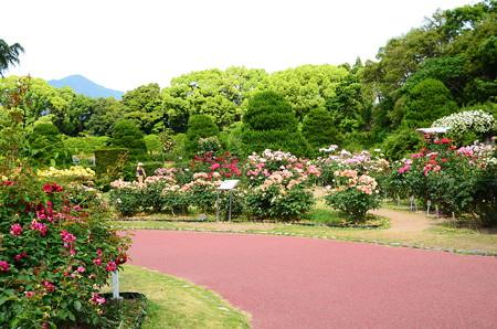 比叡山と薔薇園