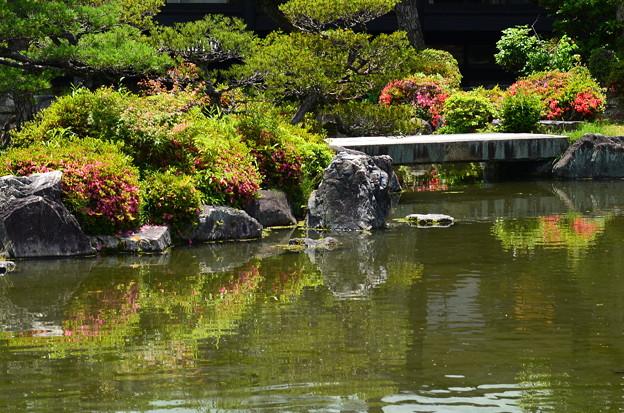 皐月を映す池