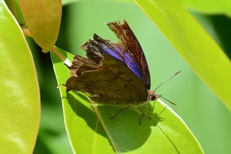 ボロボロの紫