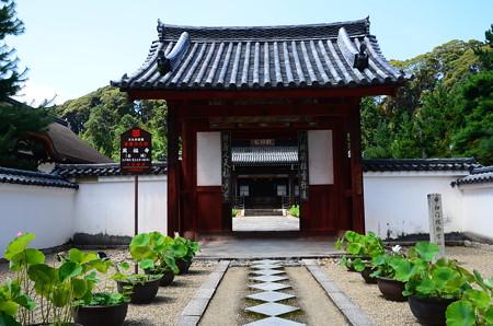 中門前の蓮