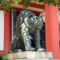 Photos: 吽の狛虎