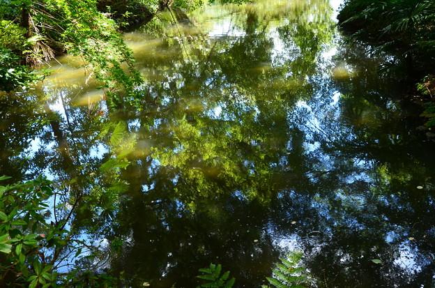 池に映る夏