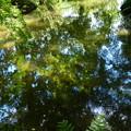 Photos: 池に映る夏