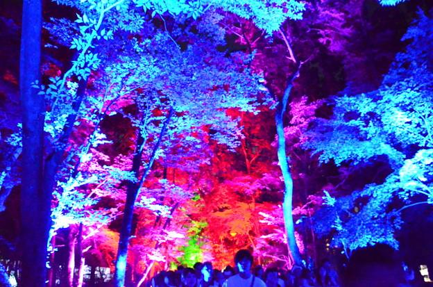 呼応する森と自立しつつも呼応する生命