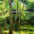 Photos: 晩夏の祇王寺